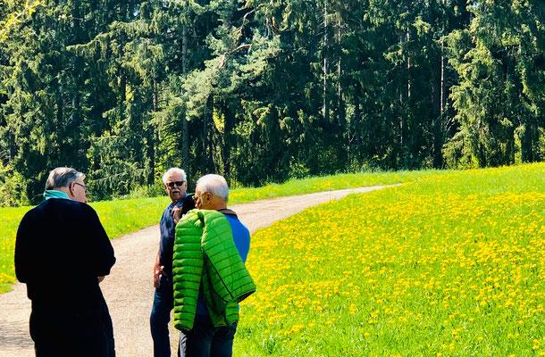 Wald und Wiesen in Maigrün.