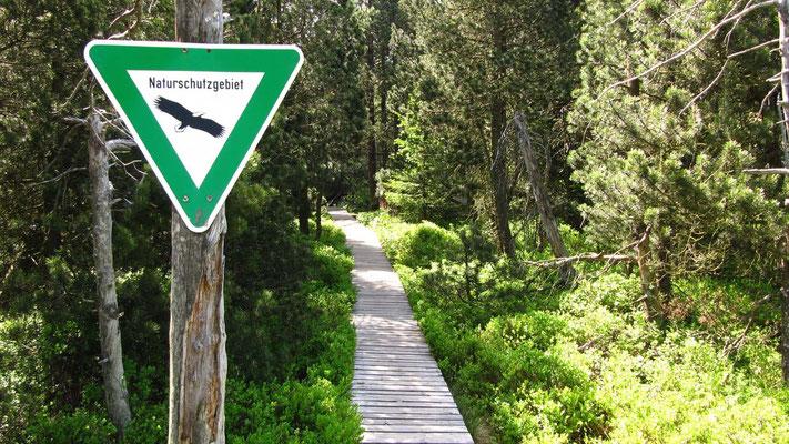 Ein hochgelegter Holzbohlenweg führt durch die schützenswerte Hochmoorlandschaft.