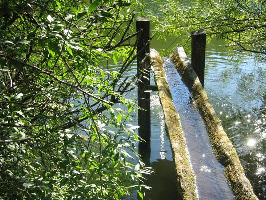 Quelleinlauf Tumlinger See