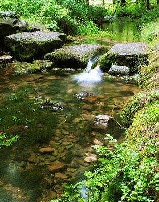 Der Breitenbach im Wellnesswald