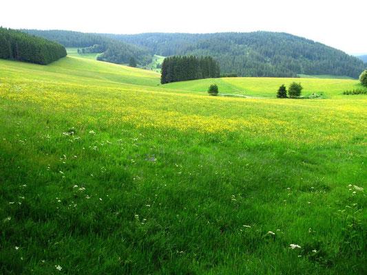Einfach wanderbar. Unser Schwarzwald.