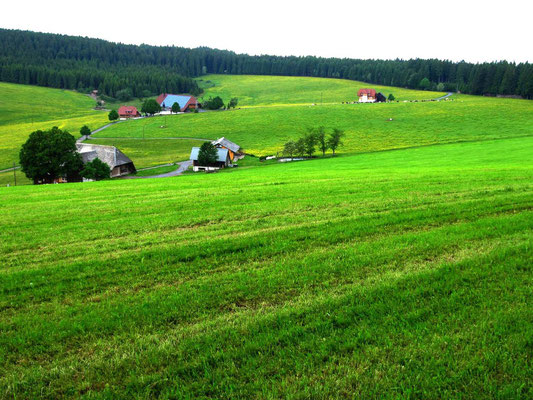 Der offene, etwas stärker besiedelte südliche Schwarzwald. Es fing leicht an zu regnen. Kittel aus, Kittel an. Ein Regenschirm hat auch seine Vorteile.