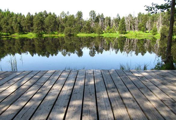 Direkt von der Pausen-Ruhebank genießen wir den Ausblick auf die spiegelglatte Moorsee-Oberfläche.