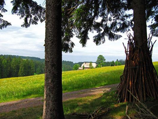 Was wir als Schwarzwald-Romantik genießen, ist für die Bergbauern nicht selten harte Arbeit.