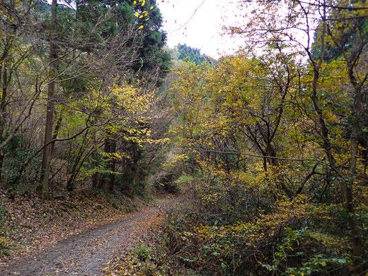 黄葉の林道 2015年11月下