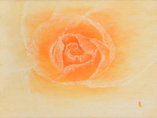 Rose Orange, 40*30, 2014