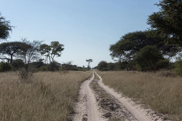 14.05. Makgadikgadi Pans NP; wir fahren eine wunderschöne Piste Richtung Njuca Hills. Unterwegs sehen wir viele Insekten und Echsen, weswegen wir recht langsam voran kommen.