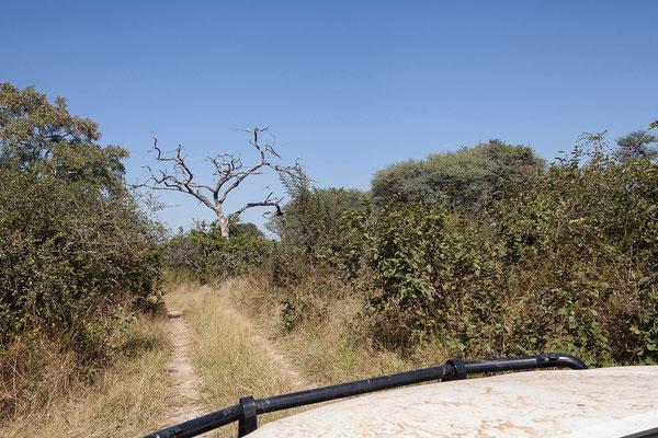 29.4. Bwabwata NP/Kwando Core Area. Wir verbringen einen tollen Tag in wunderbarer Landschaft.