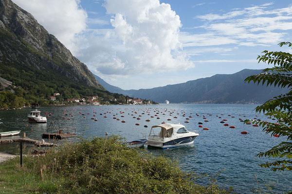 18.9. Wir genießen die Fahrt entlang der Bucht von Kotor.