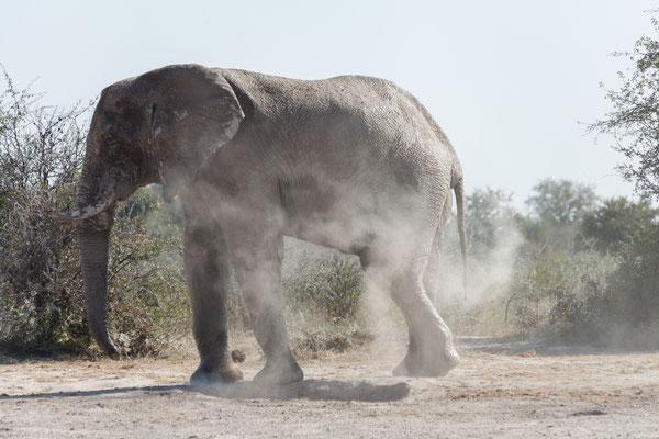 11.05. Nxai Pan NP, am Wasserloch des South Camp schauen wir eine Weile dem Treiben der Elefanten zu.