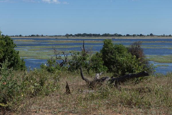 03.05. Chobe NP (Riverfront), die Landschaft gefällt uns ausnehmend gut hier