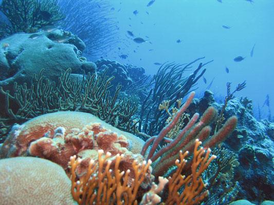 """Ein weiterer Tauchgang bei """"Tori's Reef"""""""