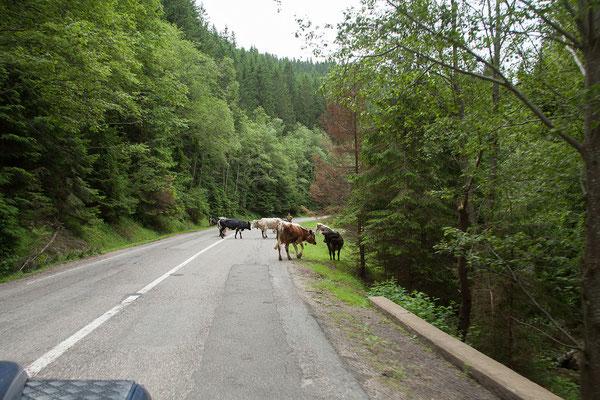 17.6. Unterwegs in der Bucovina.