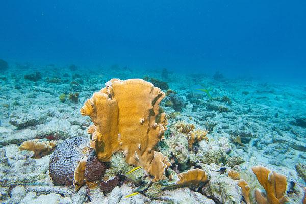 """Tauchgang bei """"Tori's Reef"""""""
