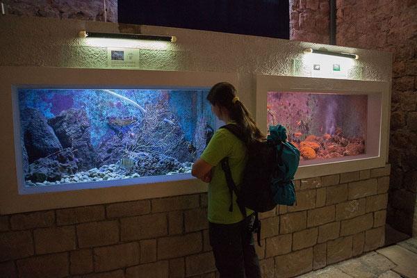 21.09. Dubrovnik - Aquarium