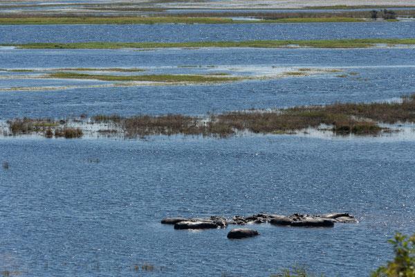 03.05. Chobe NP (Riverfront), tolle Ausblicke bieten sich auf den Fluss und seine Bewohner