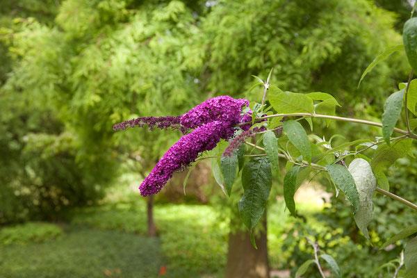 23.07. Planten un Blomen