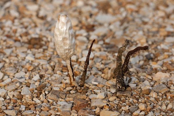 An der Ostküste - ungewöhnlicher Fund dank seltenem Regen