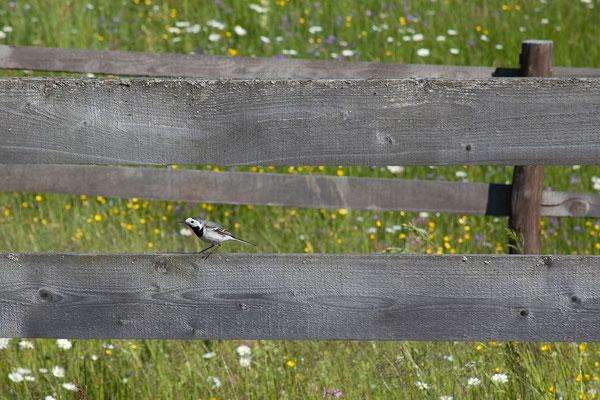 16.6. Auf dem Weg zum Kloster Orata.