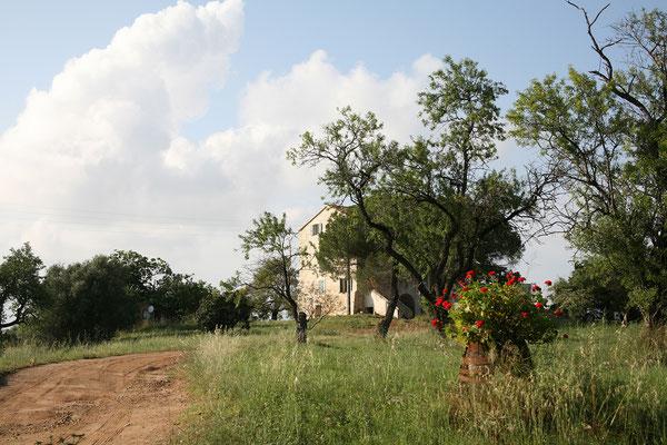 27.5. Aléria: die Zufahrt zum Étang de Diane führt durch ein Weingut