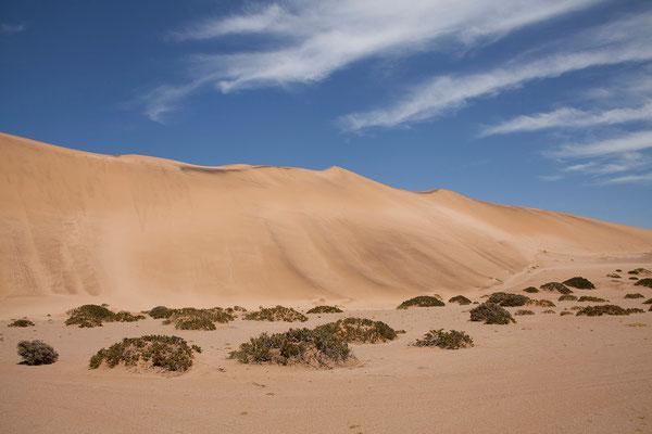 21.2. Der Ausflug ist sehr interessant und führt gegen Ende über die hohen Dünen der Namib.