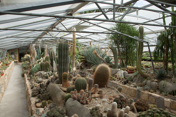 Kaktusgarten der Familie Grašič, Seča