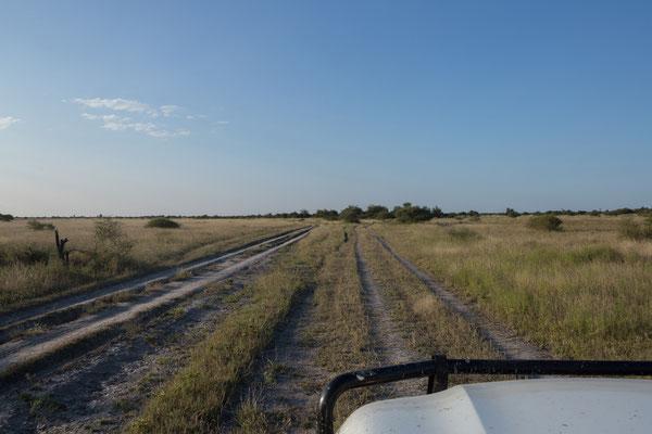 11.05. Nxai Pan NP, wir unternehmen einen Game Drive im Gebiet nördlich des South Camps.