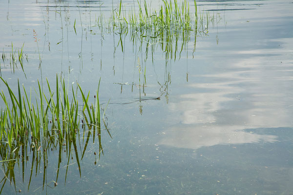 17.06. Cerkniško jezero