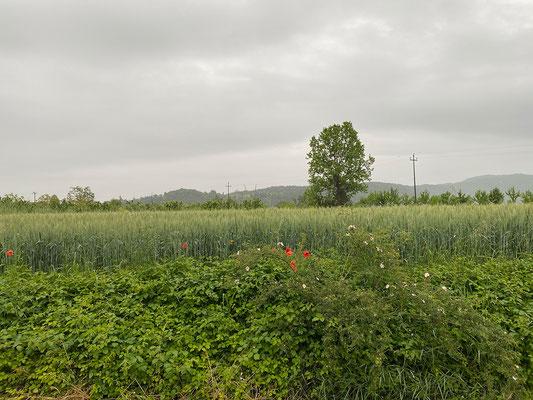 24.5. Wie angekündigt, setzt an Tag 3 des Ausflugs der Regen ein.