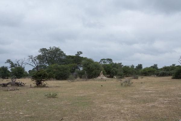 25.4. Nicht zuletzt dank der guten Regenzeit ist die Landschaft in der Mahango Game Reserve sehr grün.