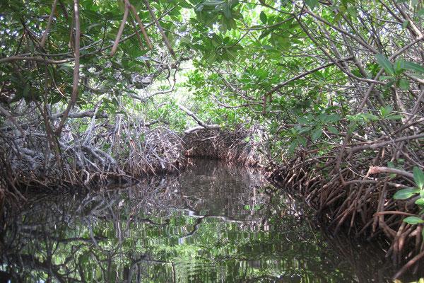Kayaktour in die Mangroven