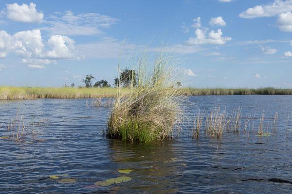 08.05. Moremi GR; wir genießen die Fahrt durch die tolle Landschaft der Xakanaxa Lagoon.