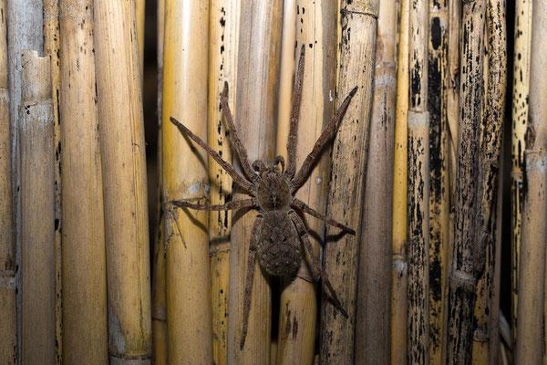 27.4. ... solage es sich um Spinnen oder Insekten handelt zumindest.