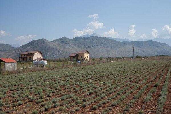 15.9. Albanien ist einer der weltweit größten Exporteure von Salbei