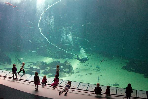 23.8. Nordsøen Oceanarium