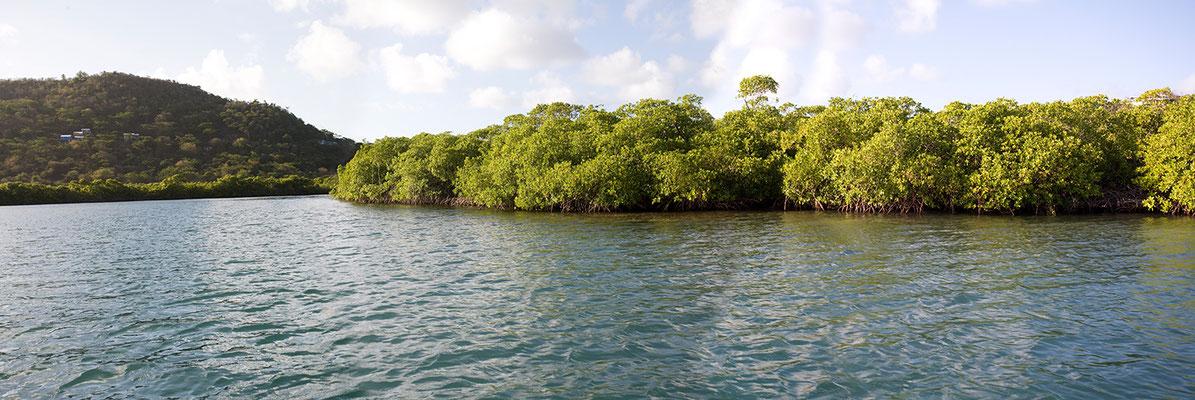 In der Tyrrel Bay (Carriacou) schauen wir uns noch die Mangroven an.