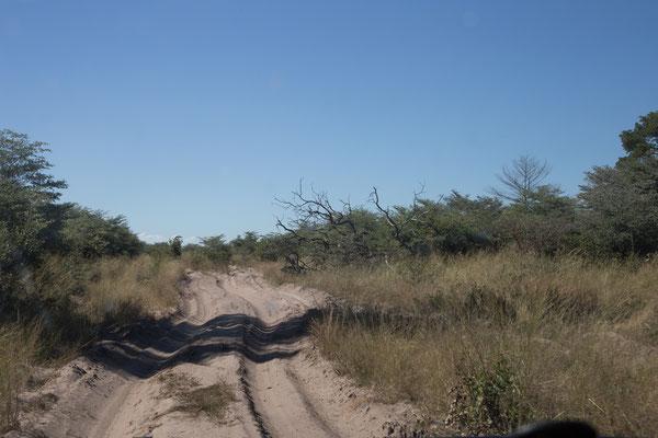 05.05. Chobe NP; über 40, z.T. sehr tiefsandige, Kilometer nähern wir uns Savuti, unserem Ziel für die kommenden 2 Nächte.