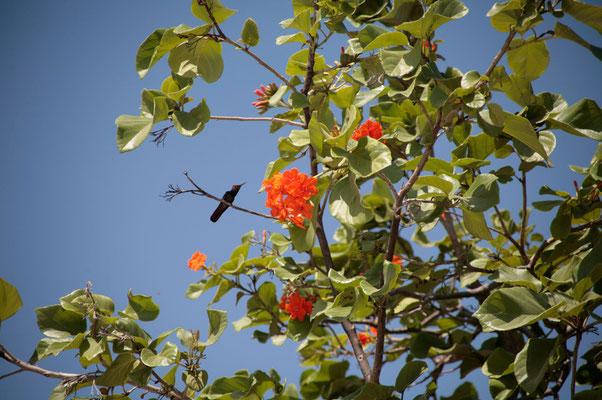 Auch Kolibris entdeckt man immer wieder auf der Insel.