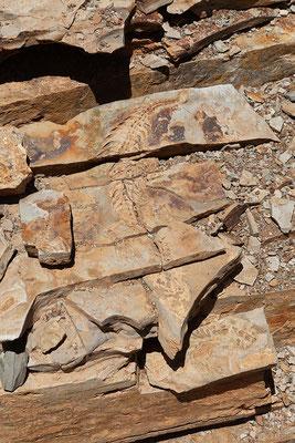 13.02. Auch beim zweiten Besuch faszinieren uns die Mesosaurus Fossilien.