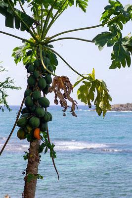 Cabier Ocean Lodge, Papayas