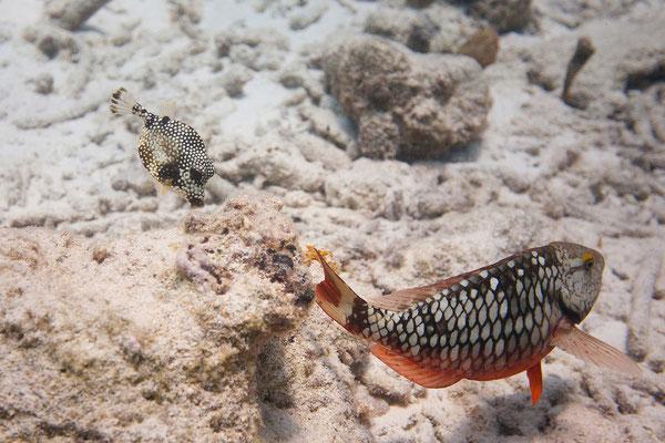 """Letzter Tauchgang bei """"Tori's Reef"""""""