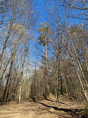 28.02. Bot. Garten - Hilmteich - Häuserl im Wald und retour: Leechwald