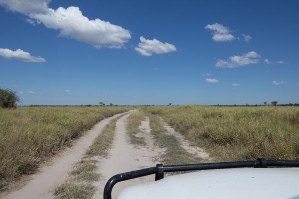 07.05. Chobe NP; unser heutiges Ziel ist die Moremi GR. Wir fahren also in Richtung Mababe Gate.