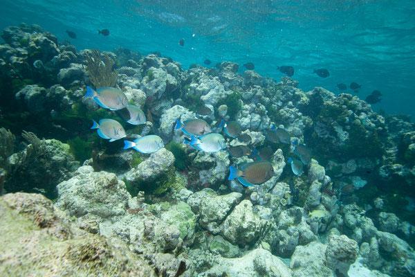 Tauchgang Tobago Cays Marine Park