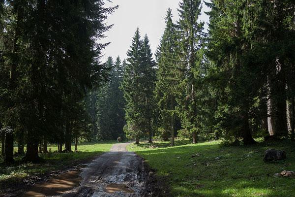 10.9. Wir machen uns durch den Durmitor Nationalpark auf in Richting Piva. Dabei handelt es sich um rund die halbe Strecke der als Durmitor Ring bekannten Rundfahrt von Žabljak nach Piva und retour.