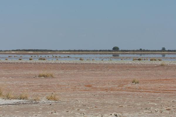 12.05. Nxai Pan NP, da die Pfanne noch sehr nass und daher nicht befahrbar ist, wurde uns statt Campsite 1 die Campsite 3 zugeteilt