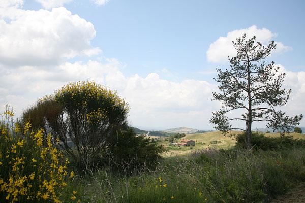 ... Landschaft der Toskana ...