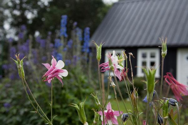 5.8. Akureyri - Botanischer Garten