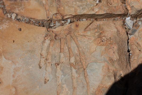 13.02. Mesosaurus Farm Tour, Mesosaurus Fossilien