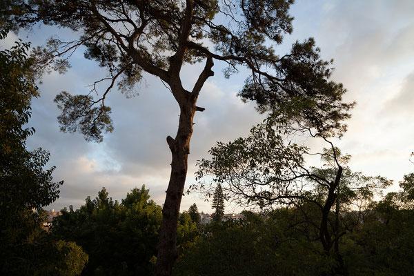 14.09. Von unserem Zimmer in der Casa do Príncipe blicken wir auf den Botanischen Garten.